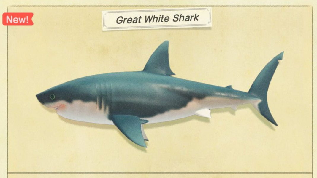 Animal-Crossing-New-Horizons-–-How-to-Catch-Great-White-Sharks